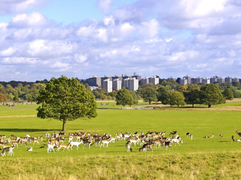 Richmond Park | 50 Free Things to do in London