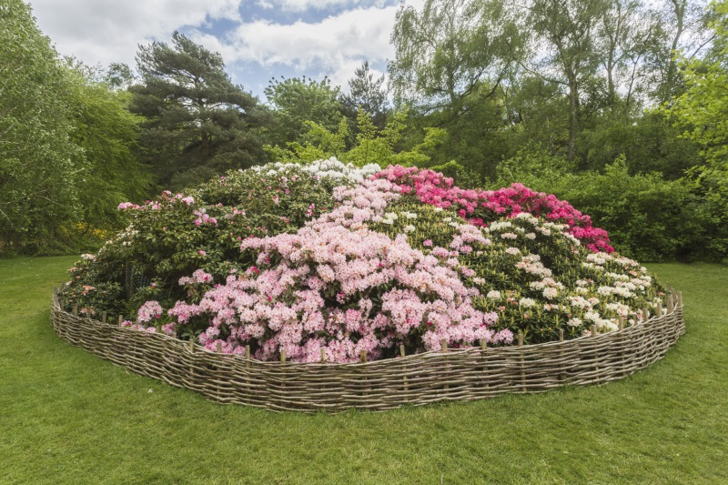 Isabella Plantation | 50 Free Things to do in London