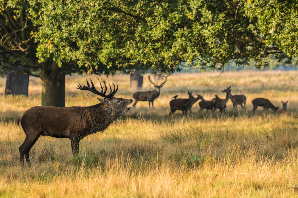 Richmond Park, London.