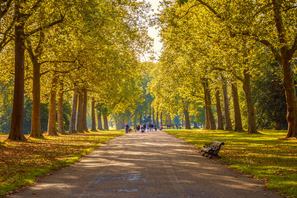Hyde Park in the autumn
