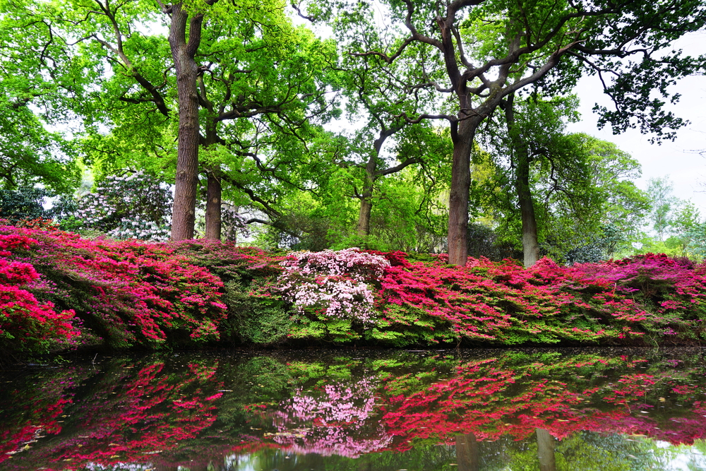 The Isabella Plantation in Richmond Park