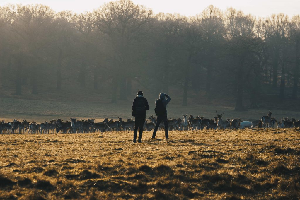 Richmond Park is brilliant for a walk on Mother's Day in London