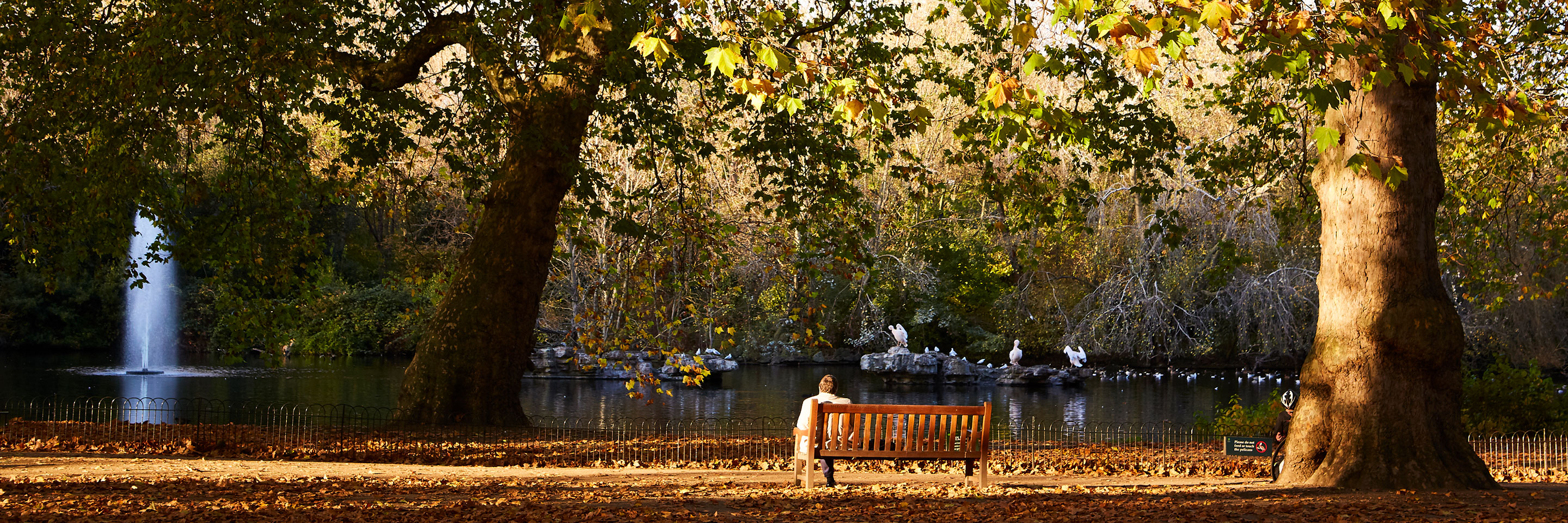 A man sitting on the bench in St. James's Park near the pond